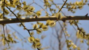 Приметы, обряды и заговоры на Пасху: как надо делать и понимать