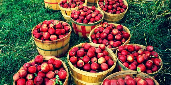 Праздник Яблочный Спас в детском саду украсят корзины с яблоками