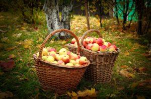 Яблочный Спас в деревне: сценарий праздника в доме культуры и на свежем воздухе