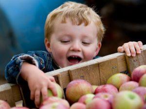 Яблоко - любимый фрукт в Спас 19 августа