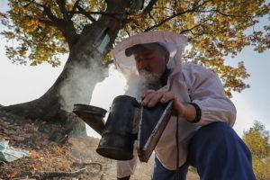 В Медовый Спас (Маковей) накануне выбирали мёд