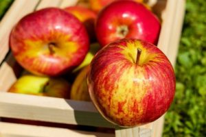 Стихи о Яблочном Спасе: лучшая подборка поэтов-классиков и стихи для детей