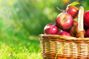 Праздник Яблочный Спас отмечают 19 августа