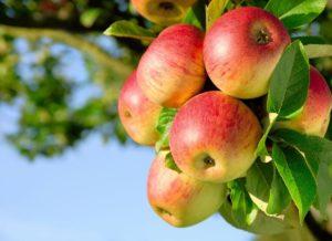 Праздник Яблочный Спас: что это такое, как отметить в церкви и дома