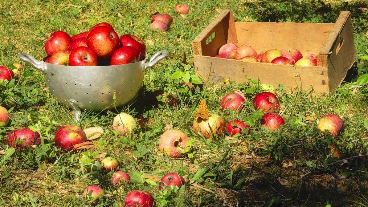 Что нужно делать на Яблочный спас: интересные народные традиции