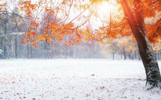 Какая будет зима: приметы погоды на Покров день 14 октября